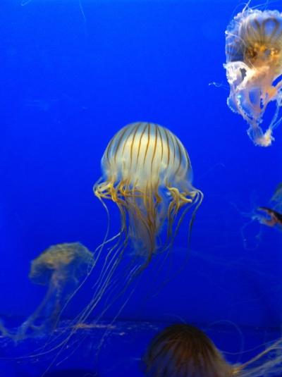 Coex Aquarium Seoul